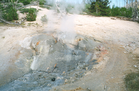 Puff 'n' Stuff Geyser, Norris Back Basin.